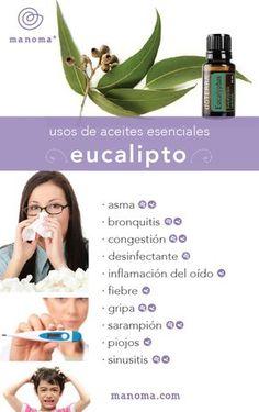 Aceites Esenciales   Eucalipto - Manoma Spa & Wellness Los Cabos
