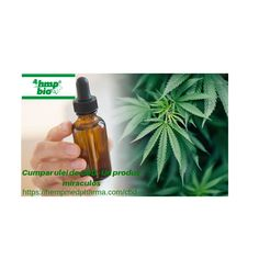 Buy CBD oil - A miraculous product Have you tried CBD oil? With Tons of health benefits like relieving anxiety, boosting energy levels and aiding in pain relief can be seen after using CBD oil. Have You Tried, Hemp Oil, Miraculous, Pain Relief, Health Benefits, Anxiety, Water Bottle, Drinks, Anxiety Awareness