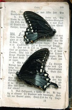 """Literature and butterflies are the two sweetest passions known to man"" Vladimir Nabokov"