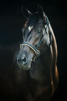 Wordy Wednesday - The Exquisite Equine