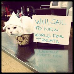 will sail for treats