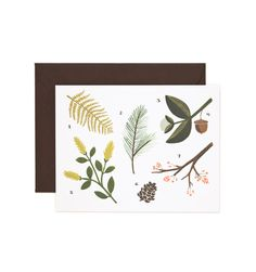 Botanical Chart Available as a single folded card or a boxed set of 8