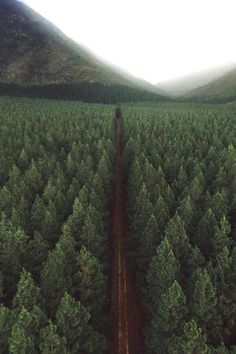luxury cars - Field of trees trees tree pine pines nature landscape photography green mood mountain fog Beautiful World, Beautiful Places, Landscape Photography, Nature Photography, House Photography, Camping Photography, All Nature, Nature View, Adventure Is Out There