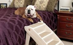 Dog Ramps or Dog Stairs: How to Decide - Top Dog Tips