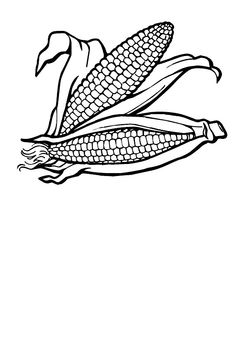 Corn On the Cob Coloring Page Posts related to Corn Coloring Pages