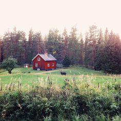Elchsafari in Långberget - Schweden.