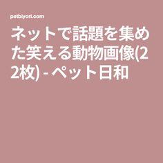 ネットで話題を集めた笑える動物画像(22枚) - ペット日和