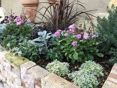 天野麻里絵さんの「やってみよう!初めてのガーデニング」。小さな花壇で育てる冬~春の花5選 - GardenStory (ガーデンストーリー) Flower Beds, Planting Flowers, Countryside, Yard, Green, Plants, Outdoor, Gardening, Gardens