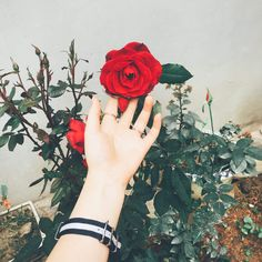 Hand Photography, Girl Photography Poses, Hand Pictures, Girly Pictures, Beautiful Girl Photo, Cute Girl Photo, Flowers Dp, Flowers Garden, Girly Dp