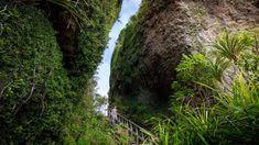 Great Barrier's stairway to heaven: NZ's best short walk | Stuff.co.nz Steep Staircase, Stairway To Heaven, Stairways, Exploring, Country Roads, Backyard, Travel, Ideas, Stairs
