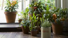 Placing your potted plants in the right spots can make a big difference