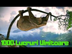 (36) Top 1000 Lucruri UIMITOARE - YouTube Martin Luther, Things To Know, Youtube, Movies, Movie Posters, Instagram, Film Poster, Films, Popcorn Posters