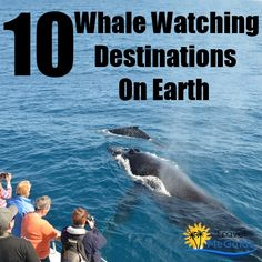 Top 10 Whale Watching Destinations On Earth...Seeing whales up close and personal!