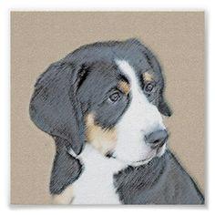 #Bernese Mountain Puppy Poster - #bernese #mountain #dog #puppy #dog #dogs #pet #pets #cute #bernesemountaindog