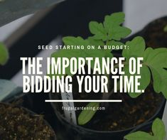 I quickly realized, that when starting seeds, getting things done faster isn't necessarily better especially if you're on a budget! But here's something that might help. Tomato Seedlings, Frugal Living Tips, Seed Starting, Getting Things Done, Gardening Tips, Saving Money, Budgeting, Seeds, Diy
