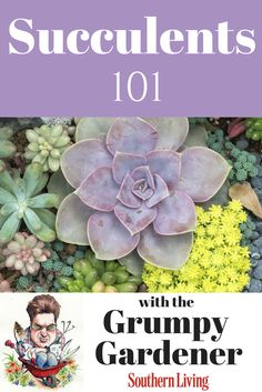 Succulents 101: Taking care of succulents is easy with these tips from Grumpy Gardener Steve Bender.