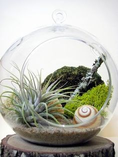 still want a hanging terrarium