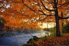 The Fall Foliage in Maine