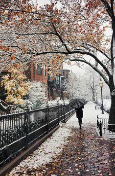 Changing from fall to winter. Winter Szenen, Winter Love, Winter Magic, Winter Wonder, Winter Christmas, Winter Walk, Beautiful World, Beautiful Places, Beautiful Pictures