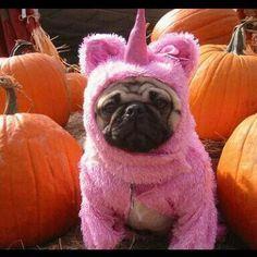 Disfrazado de halloween
