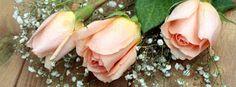 Download de Capas para Facebook com flores - rosas