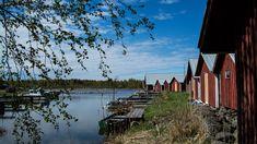 """""""Kivet ovat tähän kasvaneet"""" – näin maa kohoaa ja elämä muuttuu   Yle Uutiset   yle.fi Maa, Finland, Westerns"""