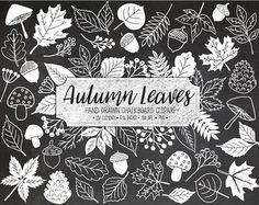 SALE. Fall Leaf Clipart. Chalk Leaves. Autumn Foliage, Acorn, Pinecone Mushroom Clip Art. Doodle Hand Drawn Autumn Chalkboard Illustration
