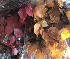 Copper Beech Foliages from Florabundance Wholesale Brown Flowers, Fall Flowers, Dried Flowers, Copper Beach, Holidays And Events, Bronze, Floral, Gold, Painting