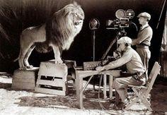 Filmación del rugido del león de Metro Goldgwyn Mayer/ Filming of Metro Goldwyn Mayer's Lion roar