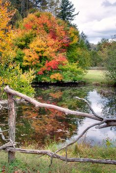 Country Pond In September Fall Pictures, Fall Photos, Nature Photos, Beautiful Places, Beautiful Pictures, Autumn Scenes, Country Scenes, Country Life, Country Charm
