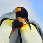 King Penguins Bonding