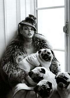 as i always say . . . the more pugs the better