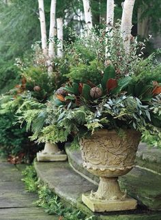 Planters of evergreens
