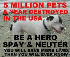 Be a hero - spay & neuter