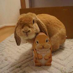 Mr. Cheeks, Bunny of Distinction