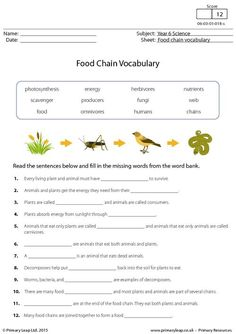 PrimaryLeap.co.uk - Food Chain Vocabulary Worksheet