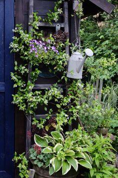 2015年07月のブログ|Nora レポート ~ワンランク上の庭をめざして~ -22ページ目
