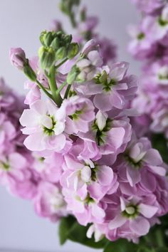 Seasonal Flowers for Your Bridal Bouquet Types Of Flowers, Cut Flowers, Colorful Flowers, Purple Flowers, Beautiful Flowers, Gardenias, Stock Flower, Line Flower, Seasonal Flowers