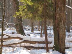 ... snowy winter ... ; Białowieża Biodiversity Academy www.WEJMUTKA.pl