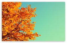 #fall #autumn #leaves #wallpaper