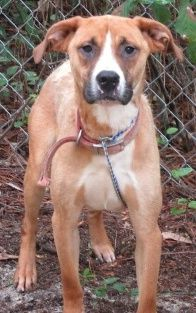 URGENT!!! At Risk To Be Killed: Sep 13, 2016 * SMILEY Breed:Hound Age: Adult Gender: Male Size: Large Shelter Information: Bulloch County Animal Shelter 81 Mill Creek Road Statesboro, GA Shelter dog ID: Smiley Contacts: Phone: 912-764-4529 Name: Nathan email: adoption-rescue@bullochcounty.net Read more at http://www.dogsindanger.com/dog/1472070711387#lPESg7B8TFmJxO8z.99