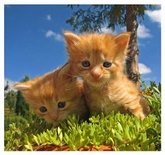 Cats Quotes and Cute Cat Pictures | Cat Pictures Blog