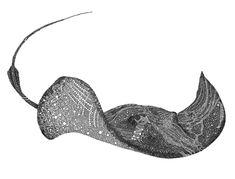 Drawing — J.PFEIFER