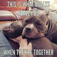 So true just love! #pitbulllove