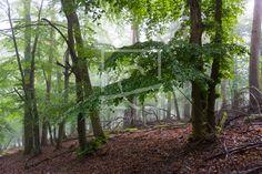 Frühlingsregen im Wald auf http://ronni-shop.fineartprint.de