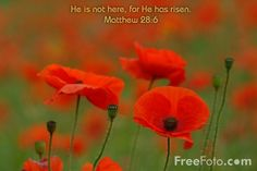 Picture of Matthew 28:6 - Free Pictures - FreeFoto.com