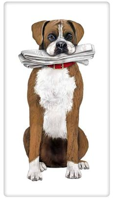 Loyal Boxer with Newspaper 100% Cotton Flour Sack Dish Towel Dishtowel www.aloveofdishtowels.com