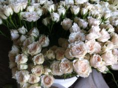 White majolica spray roses, #SprayRoses