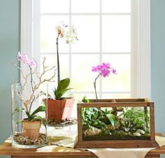 This winter, try a fresh take on indoor gardening to brighten your days. These small but stylish displays offer pretty alternatives for easy-to-grow favorites.