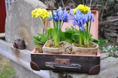 Spring in a vintage suitcase!